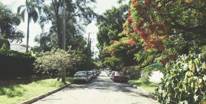Le quartier fleuri du Vedado