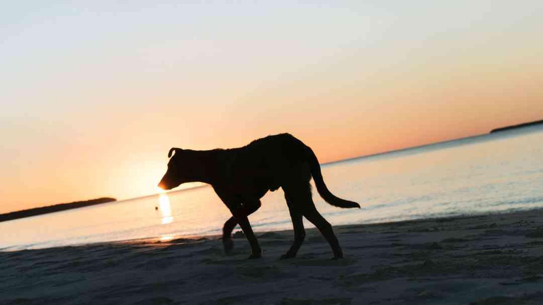 chien sur la plage d'ouvéa au coucher du soleil