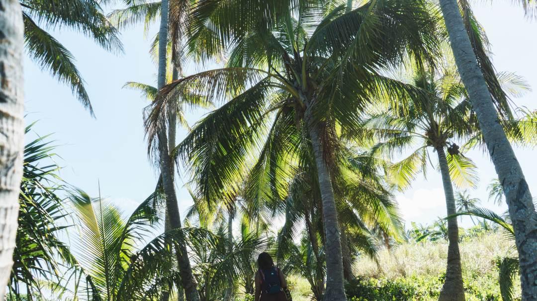 palmiers à ouvea