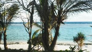 palmiers à Maré