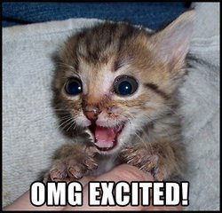 """Cat with """"OMG Excited!"""" caption"""