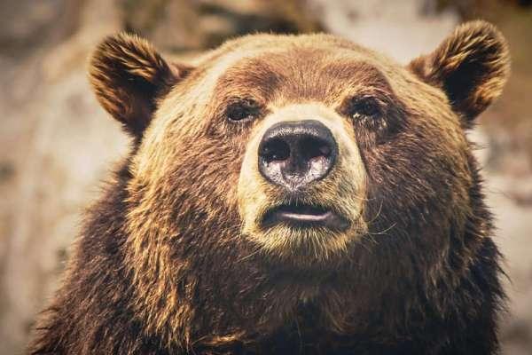 bears in northern spain