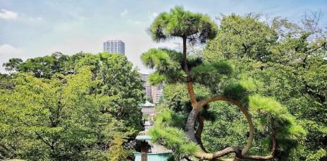 """。東京 上野。清水觀音堂:上野恩賜公園裡的清水舞台,名所江戶百景""""月之松"""""""