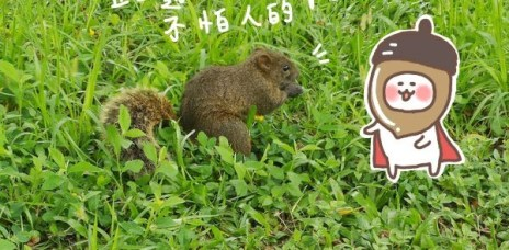 。新竹 市立動物園。2020新景點:森林食堂+森林野餐(菜單),無籠子的園內空間,乾淨舒服的回憶。