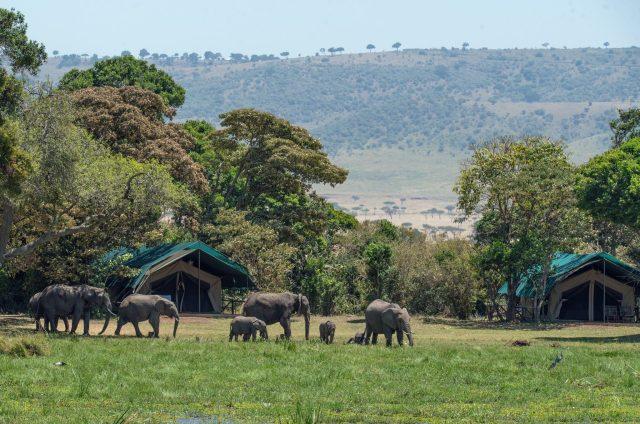 Safari Tent, Africa