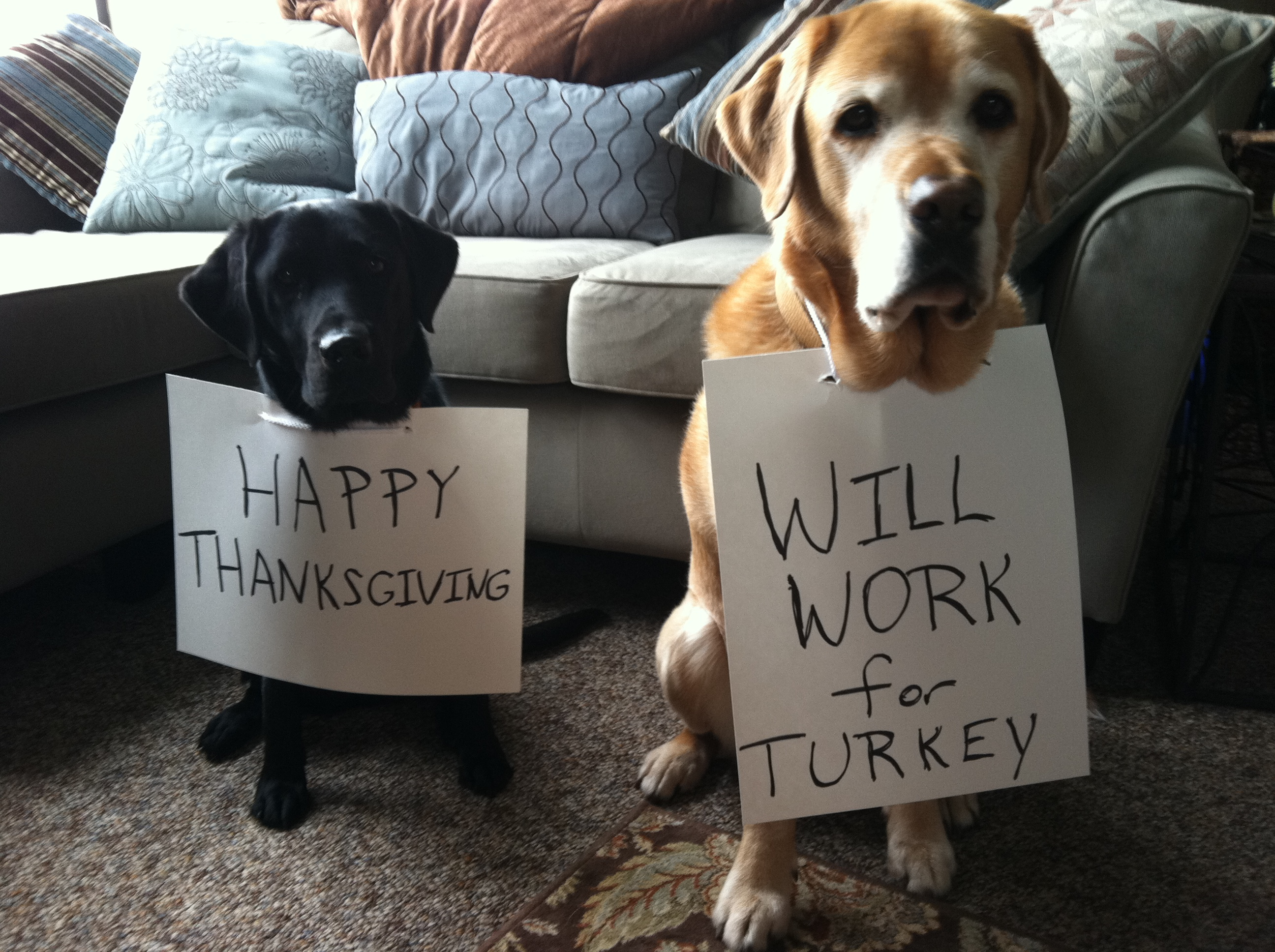 Thanksgiving No Nos For Pets