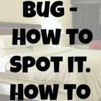 The Bed Bug - How to Spot it & How to Avoid It