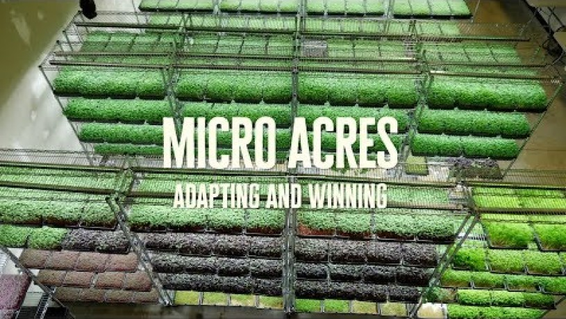 Adapting to the Current Situation and Winning with Microgreens - Micro Acres