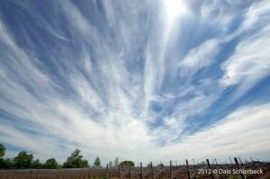 Vineland Sky