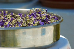 Dried Herbs ~ Folegandros, Greece
