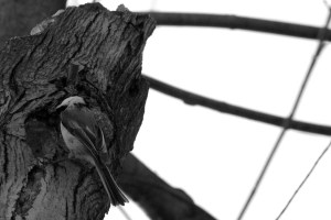 Bird_motion1