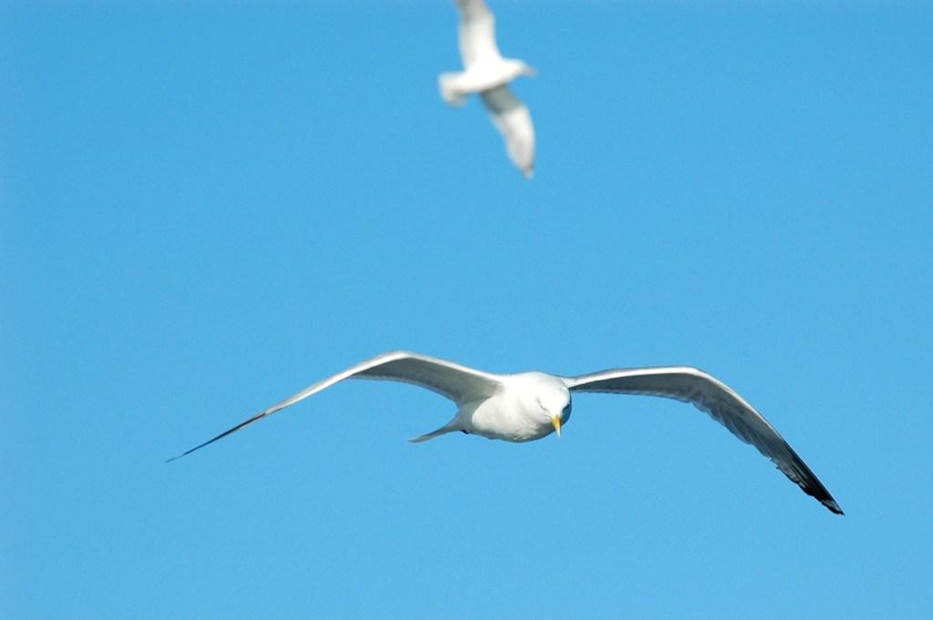 Gulls on the Way