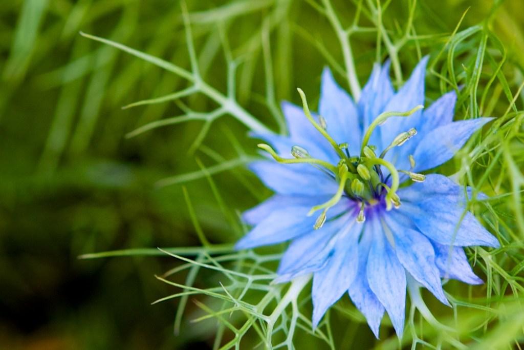Vividly Blue