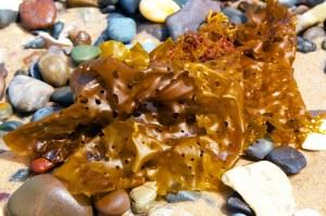 Coloured Seaweed1