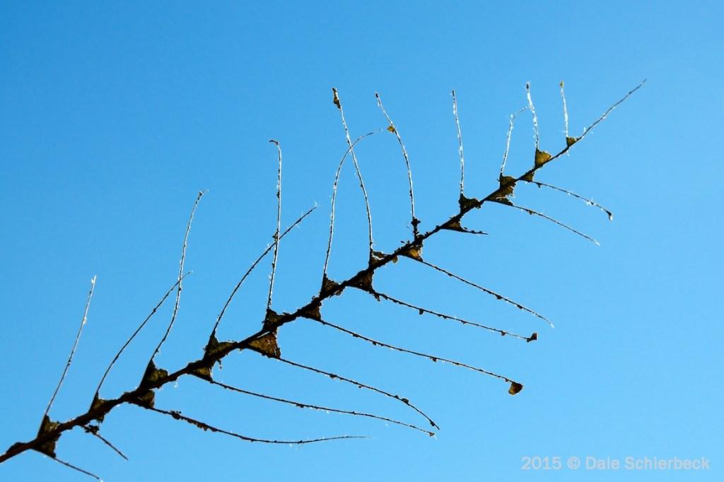 Leaf Fishbone