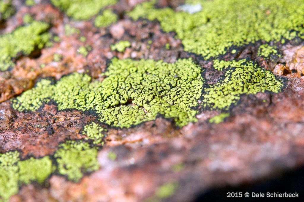 Lichen the Rock