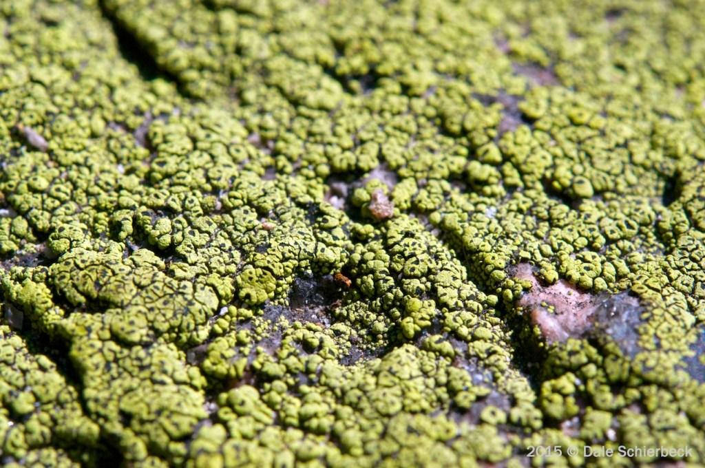 Lichen the Rock2