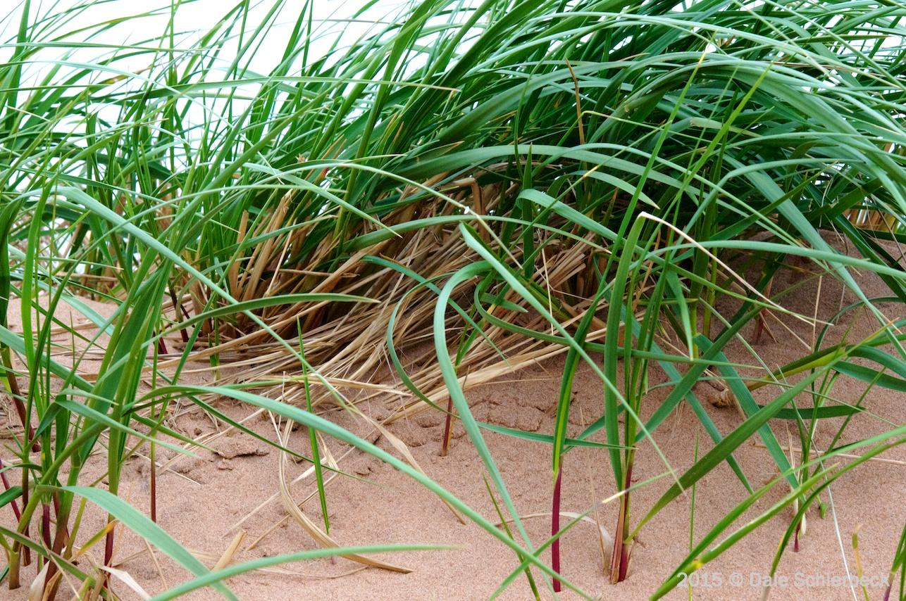 Dune Boundary