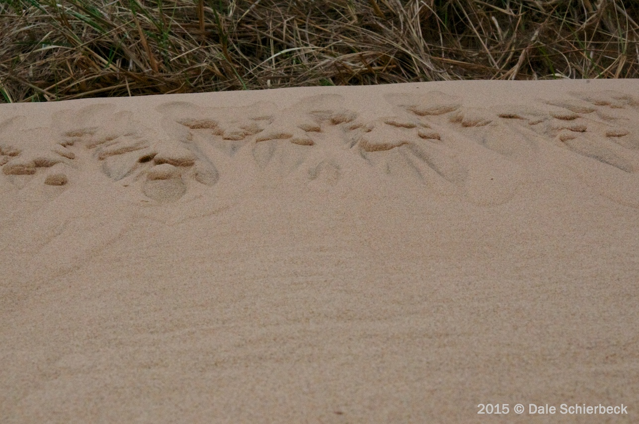 Love in the Sand 7