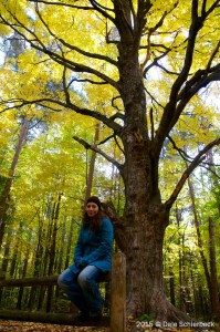 Jessica Tree