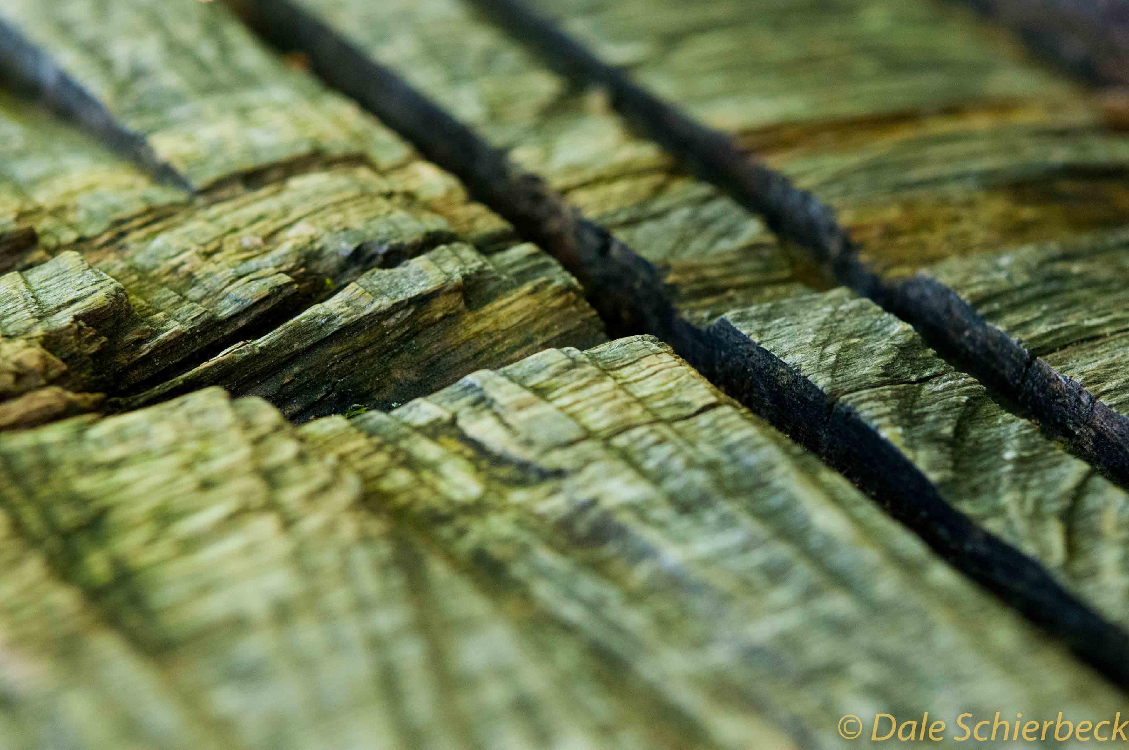 Wood_Cut-1