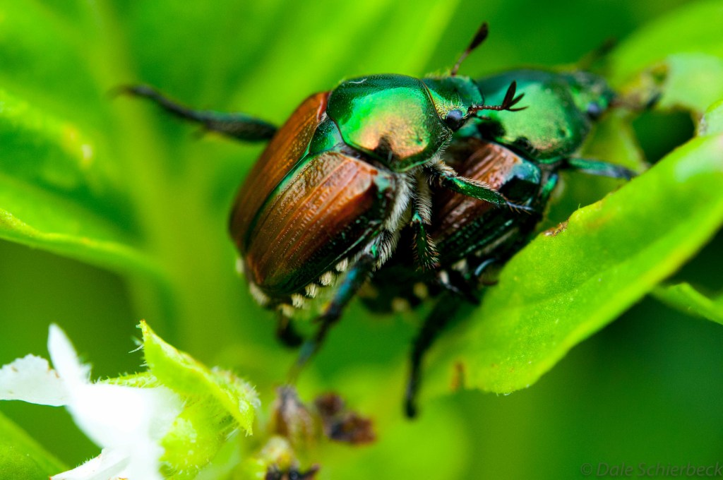 Beetles Partners