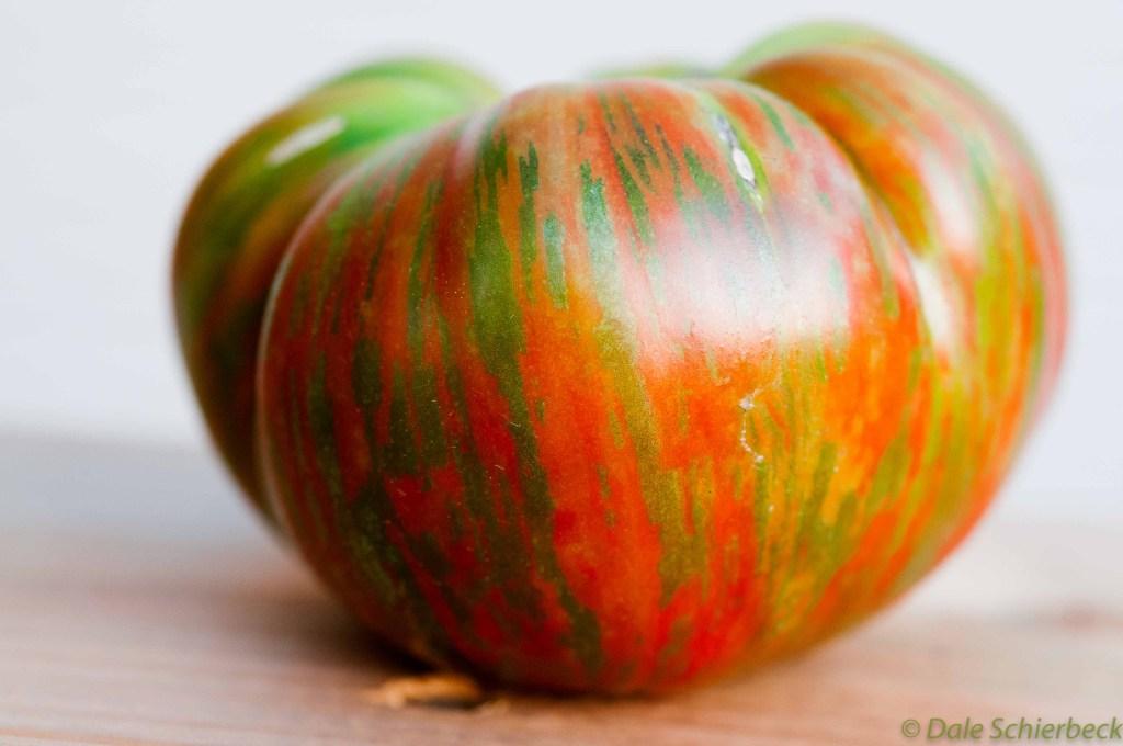 Coassack Tomato -5