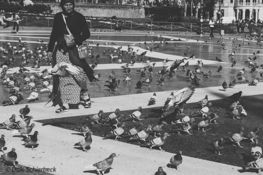 Stolen Birds