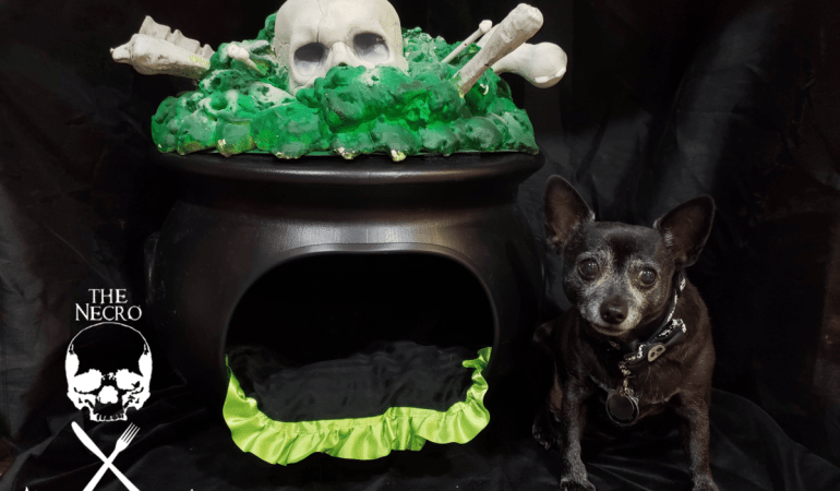 cozy cauldron dog bed: Lucifur the Lord of Barkness proudly sits next to her cozy cauldron cave