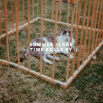 Summer Flake's stunning EP (and US debut) Time Rolls By is out digitally today
