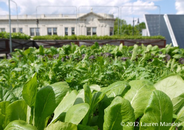 """Roof-to-Table"" - Uncommon Ground, IL || (c)2012 Lauren Mandel"