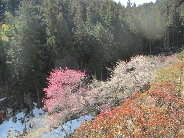 Nature harmony of green, pink, white and orange
