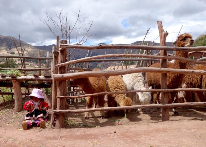 eat_wear_wander_girl&llama