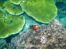 Plongée aux îles Perhentian, Malaisie