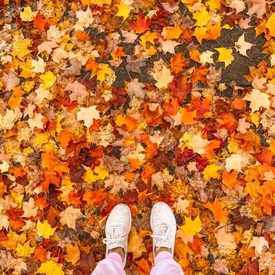 October 2020: Photoblog