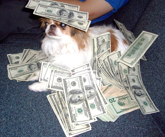 Pictures-Cute-Dogs-Money