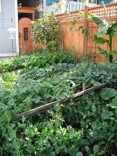 Garden Update and My Grandma