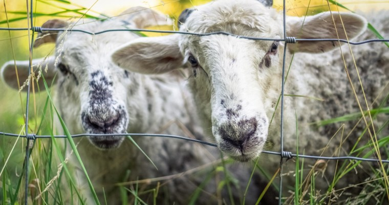 Sheep-Free Haggis (Vegan/Gluten-Free)