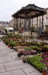 Kouter Sunday flower market