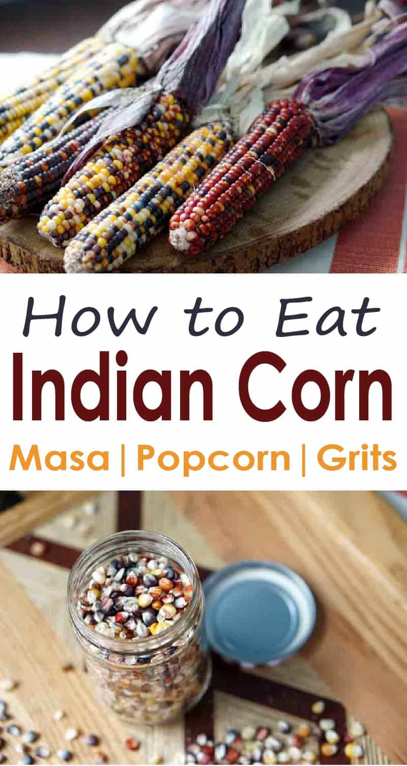 Can you eat Indian Corn? And if not, why is it on our table? This guide shares how to harvest and grind that colorful decorative corn into flour, make indian corn popcorn, and how it evolved into Modern Sweet Corn.