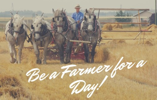 Be a Farmer for a Day1