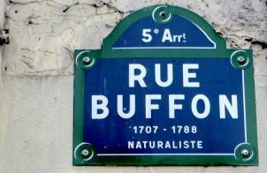 Buffon rue