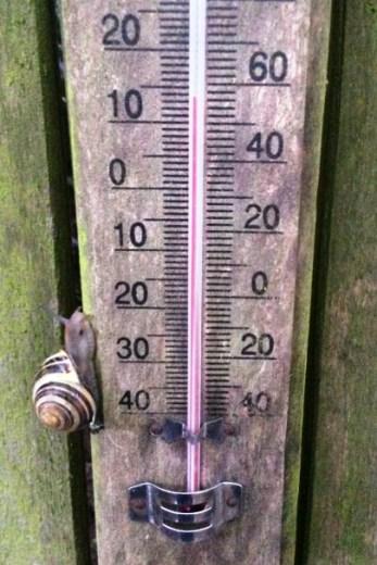 echelle thermometre avec escargot