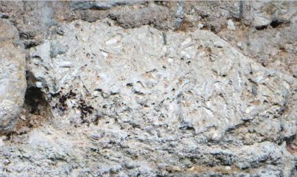 vestige-mur-61-bld-saint-michel-detail