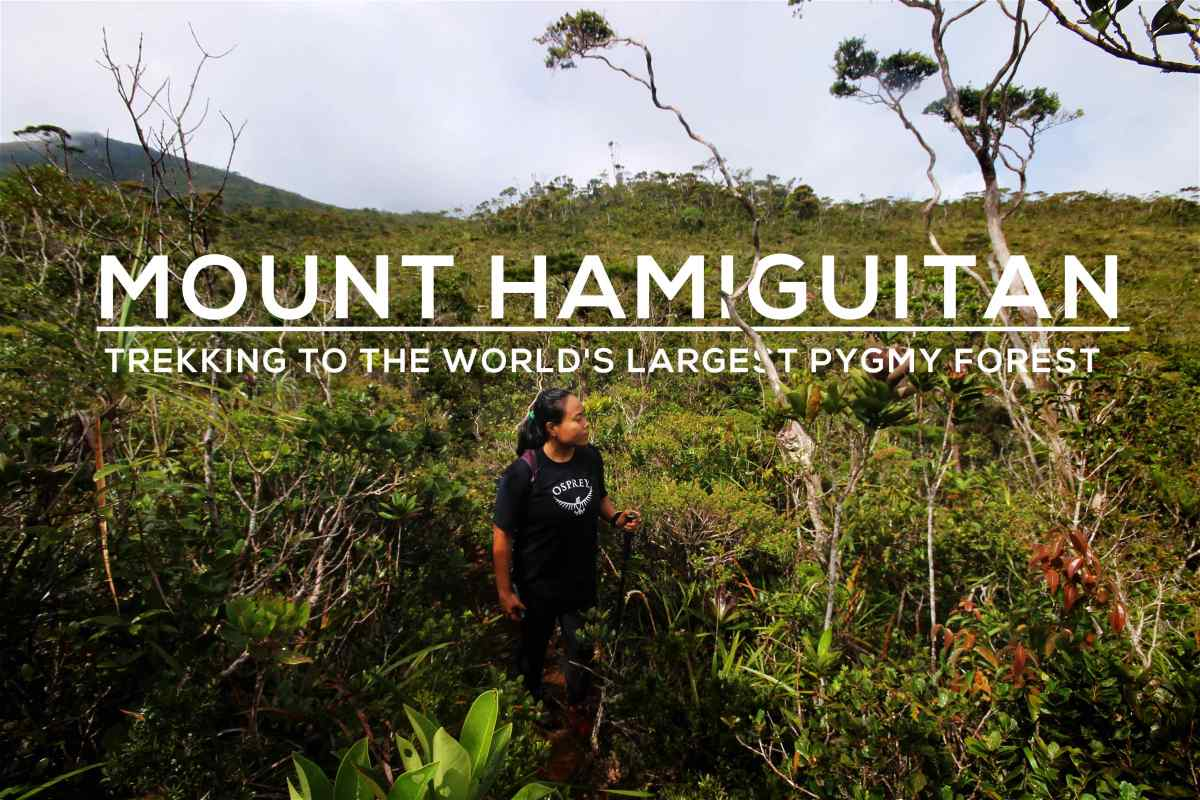 Mount Hamiguitan: Hiking to the World's Largest Pygmy Forest