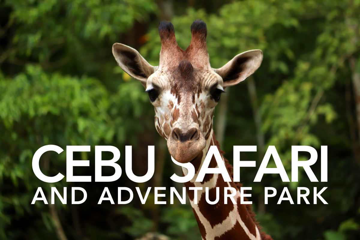 FIRST LOOK | Cebu Safari & Adventure Park – The Philippines' Biggest Zoo