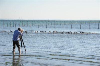 多くの野鳥が毎年降りたちます