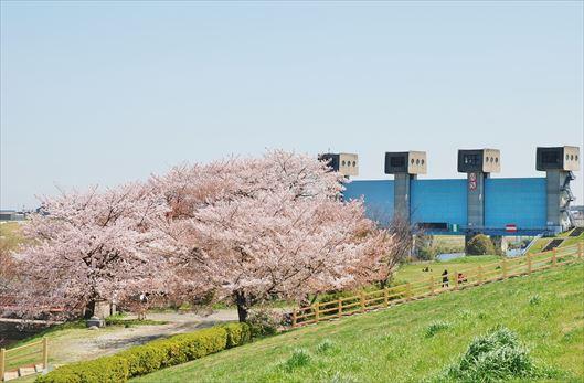 赤羽岩淵関緑地BBQ レンタル