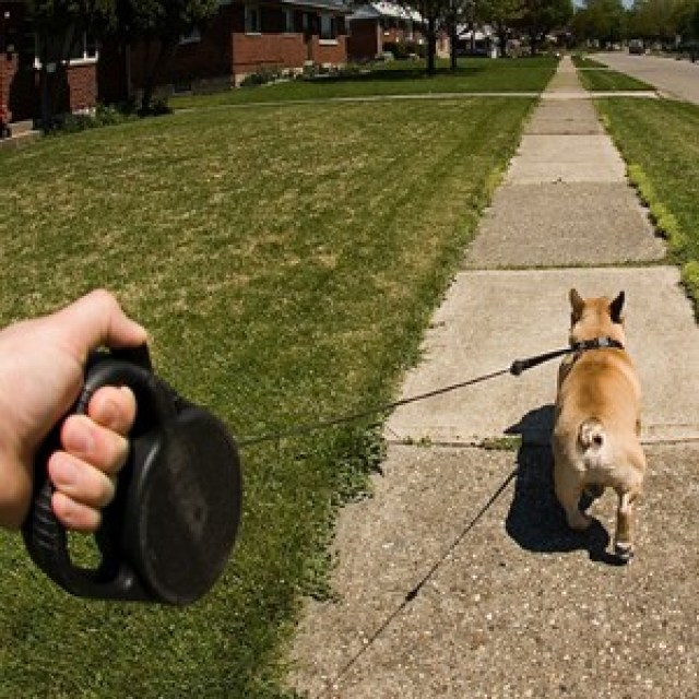 best retractable dog leash,
