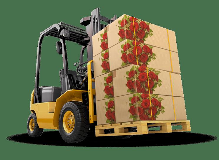 EBF Cargo